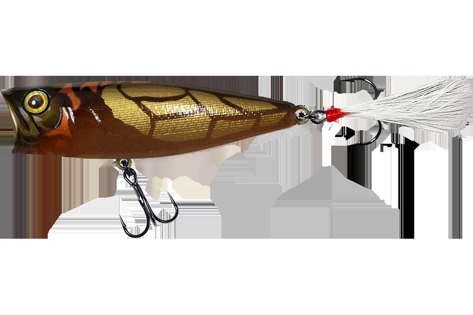cicada a