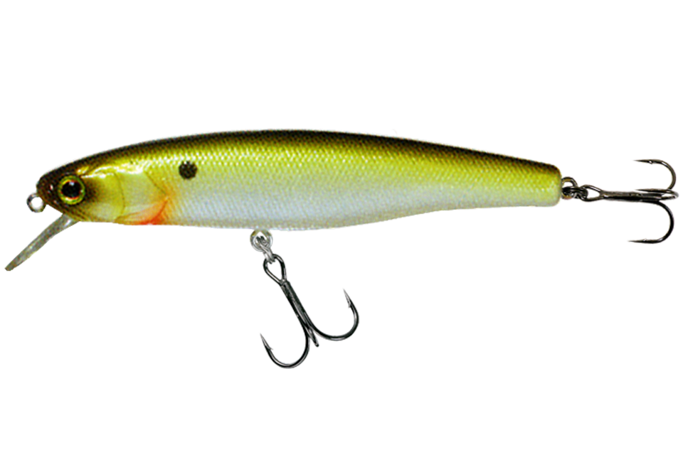 tennessee shad