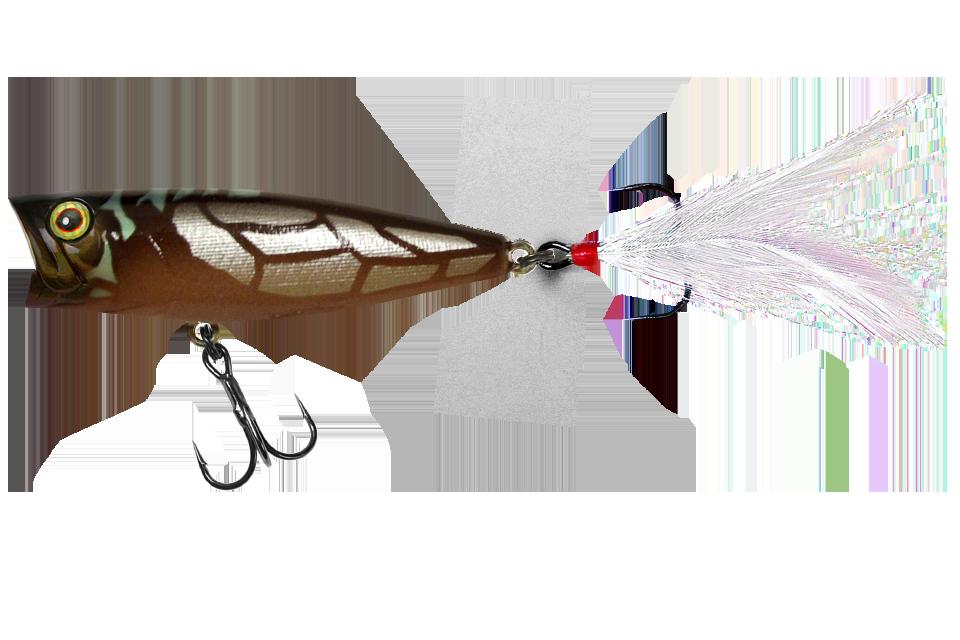cicada b